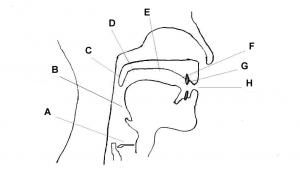 places of articulation diagram